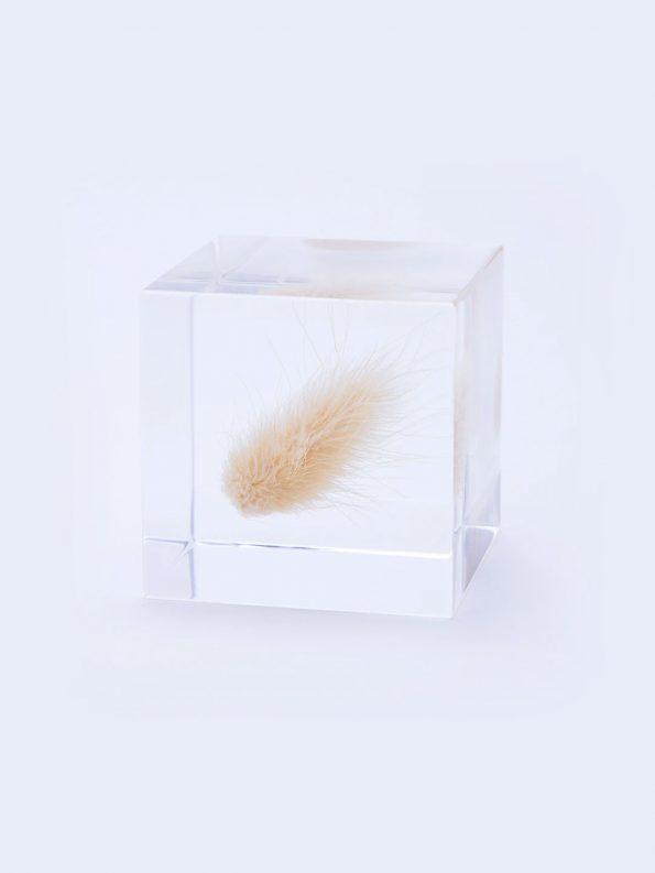 Sola Cube – Bunny Tail Grass
