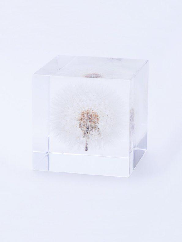 Sola Cube – Dandelion (2″)
