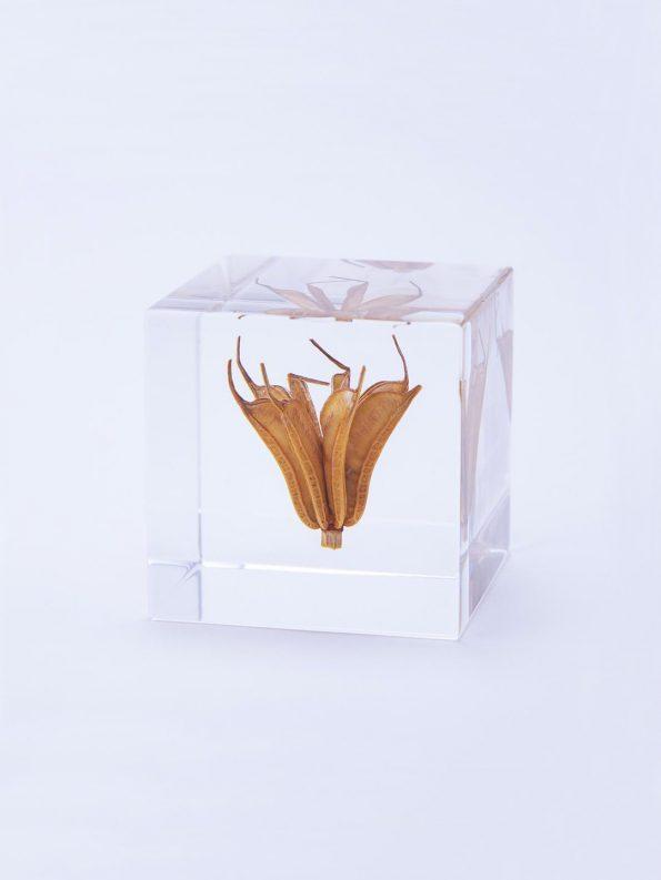 Sola Cube – Yellow Fennel Flower